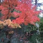 うとう神社の紅葉