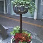新町の花たち(夏・秋編)8月