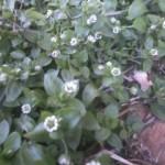 春を探して(2)
