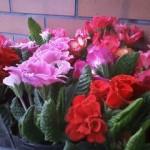 花屋さんにて
