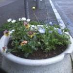 新町商店街の花たち