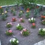 本町公園に花植えしました(6月20日)