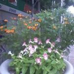 秋の花(新町商店街)