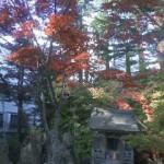 善知鳥神社にて 秋めいてきました