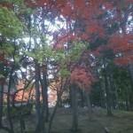 青い森公園~秋を感じて~