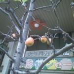 新町商店街の姫りんご