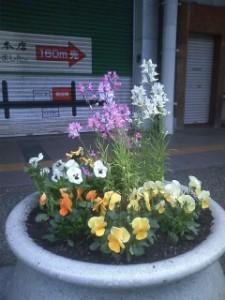 新町商店街のプランターの花