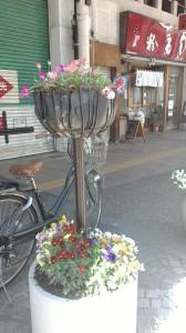 新町商店街の花 きれいに咲いています
