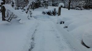 青い森公園の中の除雪道